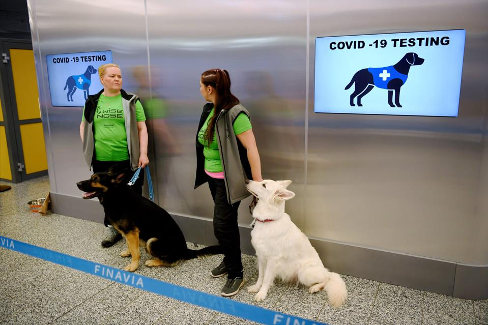 Coronavirus sniffing dogs working in Finland's airport.