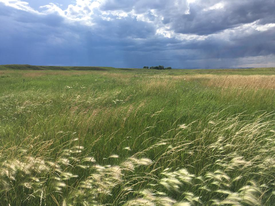 Carbon projects both protect native prairie and support family ranching like this recent Climate Trust project on the Great Plains of Montana.