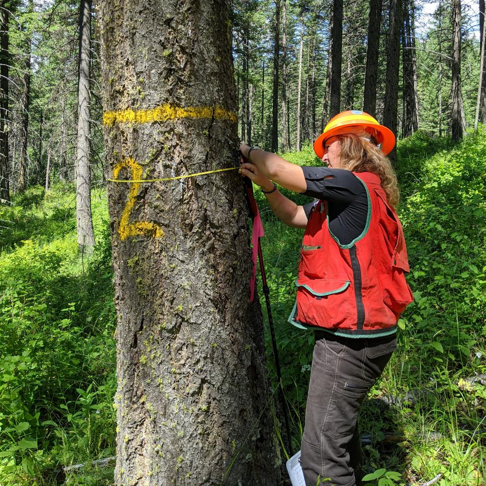 Tina Sentner with carbon offset verifier NSF Certification LLC on the Finite Carbon - Spokane Tribe of Indians Improved Forest Management project, northeast Washington state.