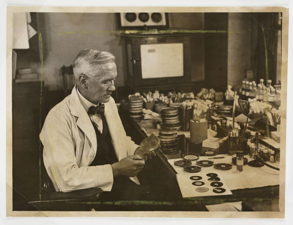 Professor Fleming working in his laboratory, 1943.