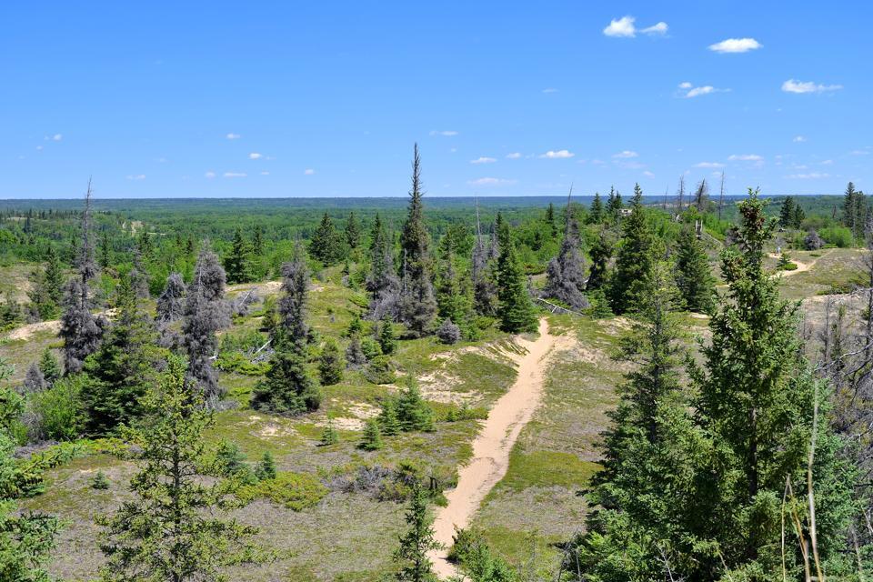 Spruce Woods Provincial Park, Spirit Sands, Carberry Desert, Manitoba, Canada