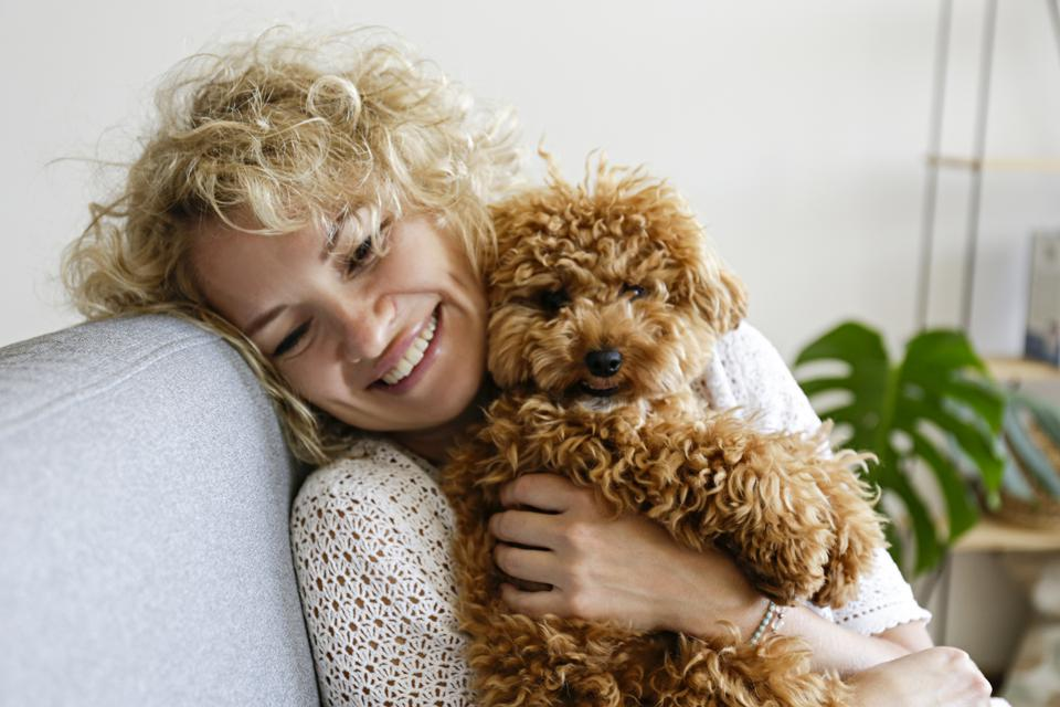Woman in knitted sweater with her maltipoo poodle.