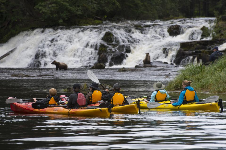 People in sea kayaks watching brown bears fishing for salmon...