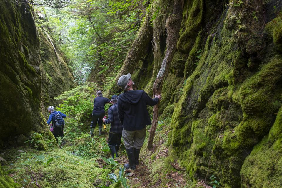 People bushwhacking in the forest of Takatz Bay on Baranof...