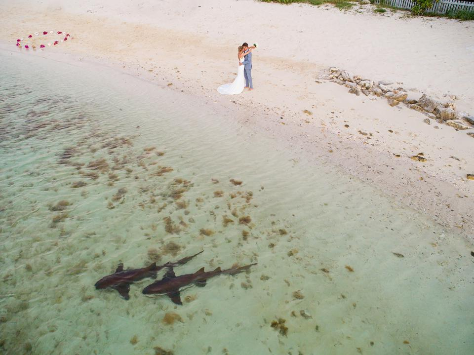 Prize winning wedding couple photo by a beach with sharks near by taken with drone