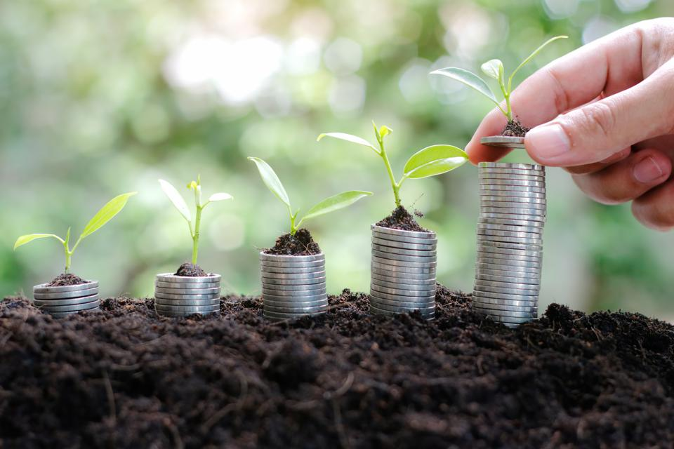 Coins and money growing plant in hand for finance and banking. saving money or interest increasing concept.