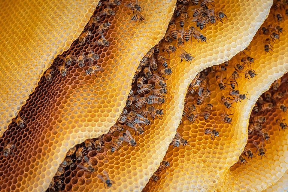 Close-Up Of Honeybees On Hive