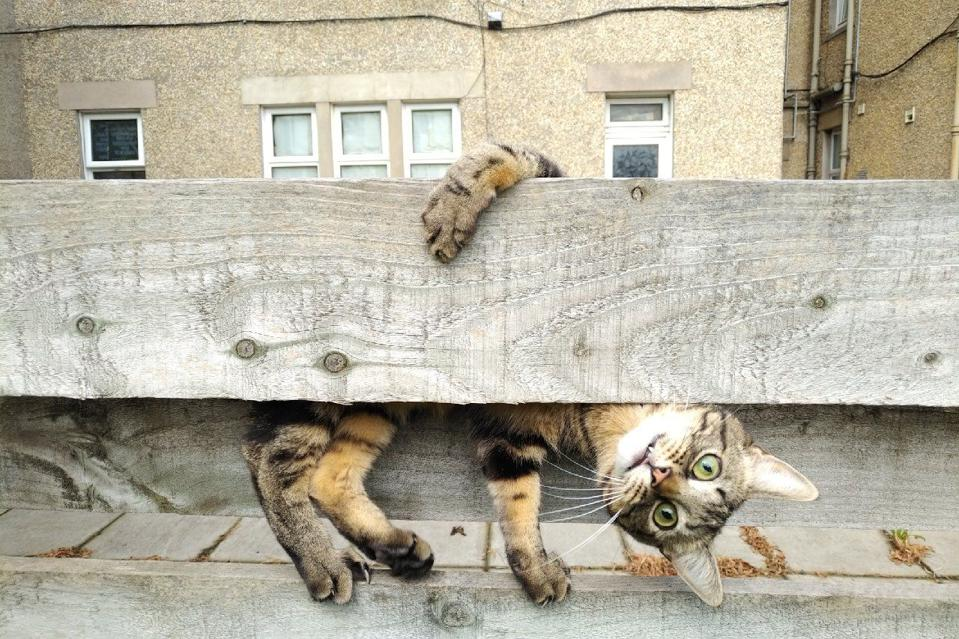 Comedy Pet Photo Awards: a cat playing hide and seek.