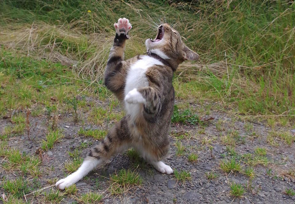 Comedy Pets Photo Awards, a cat singing