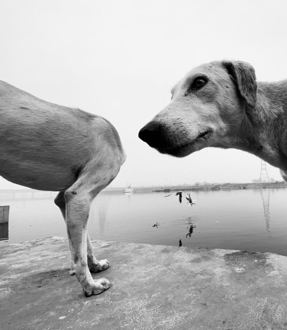 Comedy Pet Photo Competition: A dog that seems divided in two.