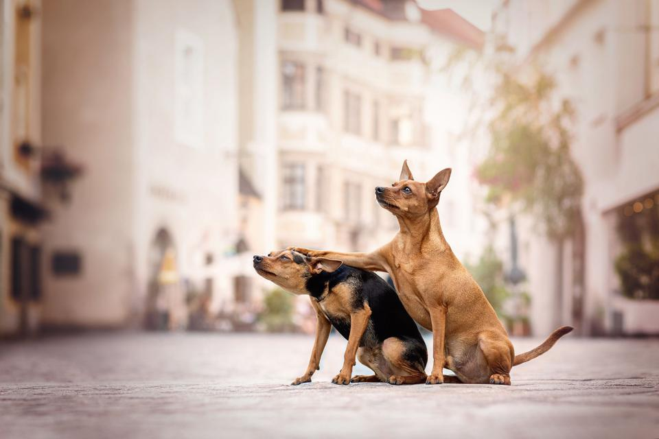 Comedy pet photo award: two dogs arm in arm