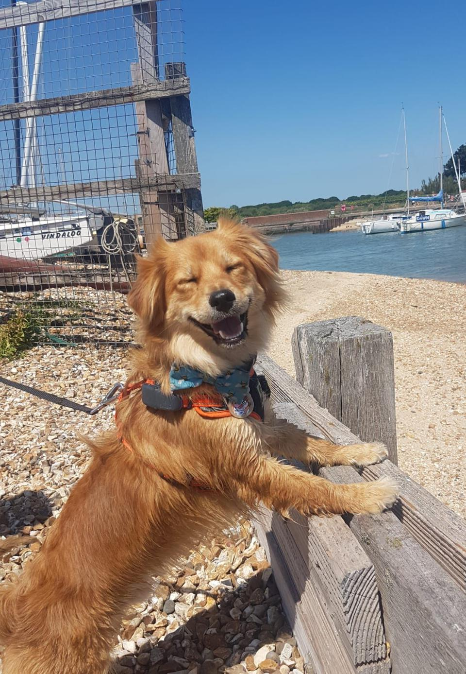 Pet Comedy Photo Costest: A Happy dog at the beach