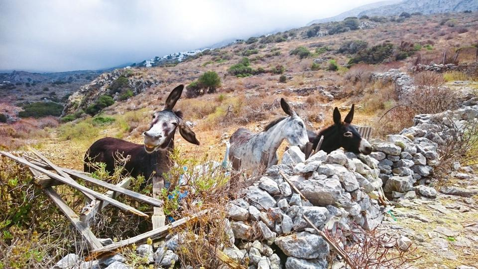 Funny pet animals Photo contest: A donkey  that seems to be smiling