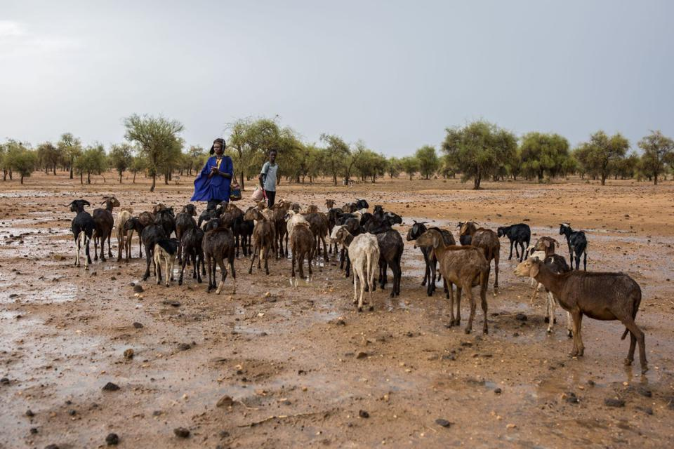 Herders searching for food and water in Mauritania.