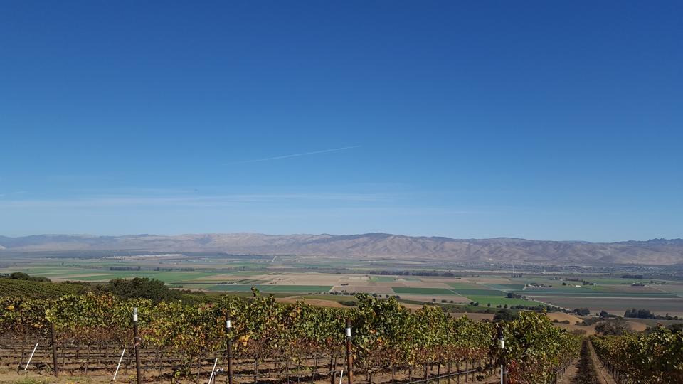 California vineyards, agriculture