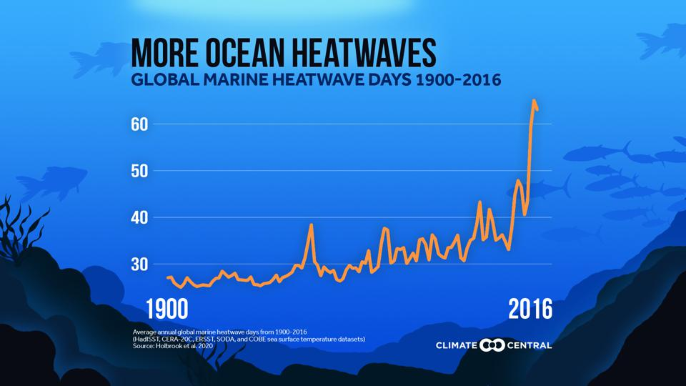 Graph showing how average annual global marine heatwave days have increased significantly over time.