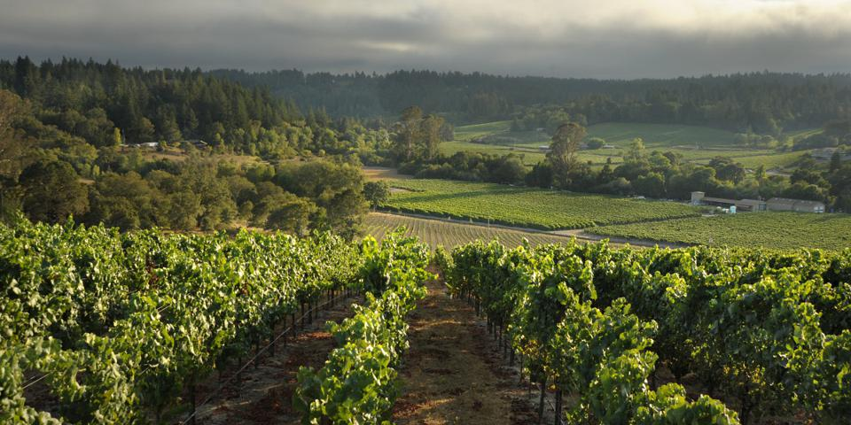 Dutton Ranch, the source of Dutton-Goldfield's flagship Pinot Noir and Chardonnay.