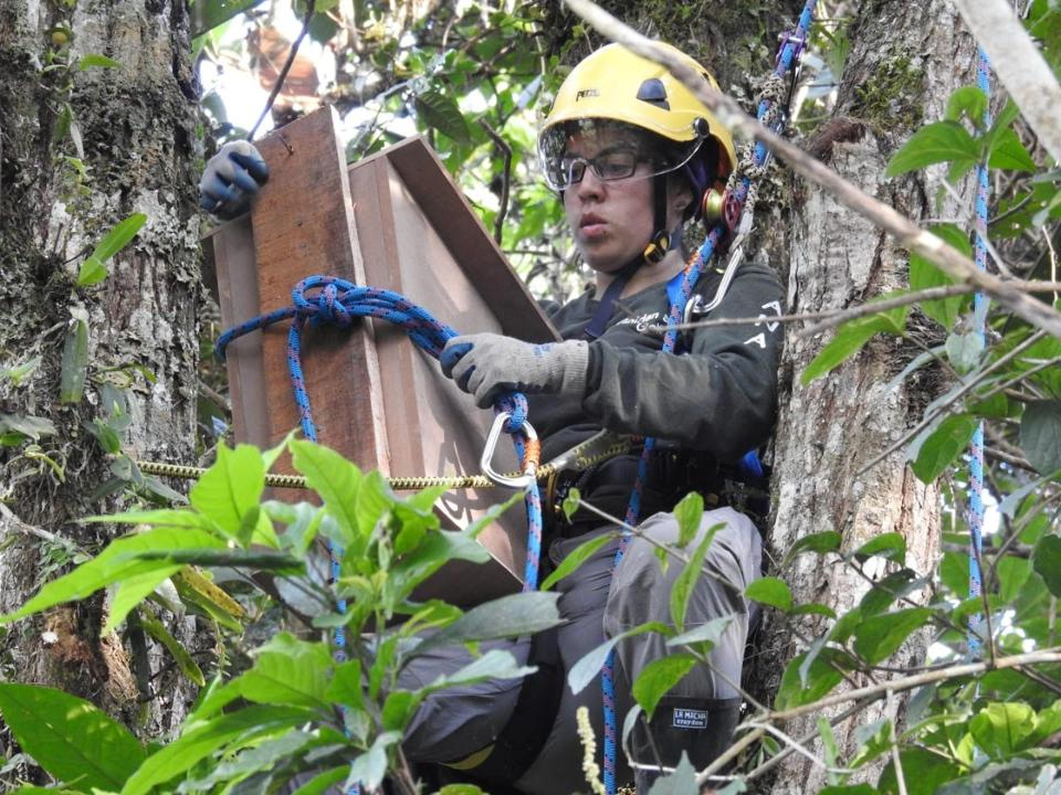 Ana María Morales installing nest boxes for owls in Southern Colombia