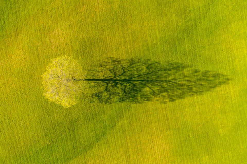 Siena Drone Photo Awards: Spring Maple Tree Shadow in Vermont,