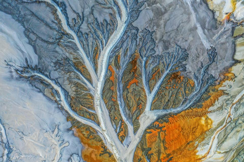 Siena Drone Photo Awards : Abstract photo of a tree with orange background