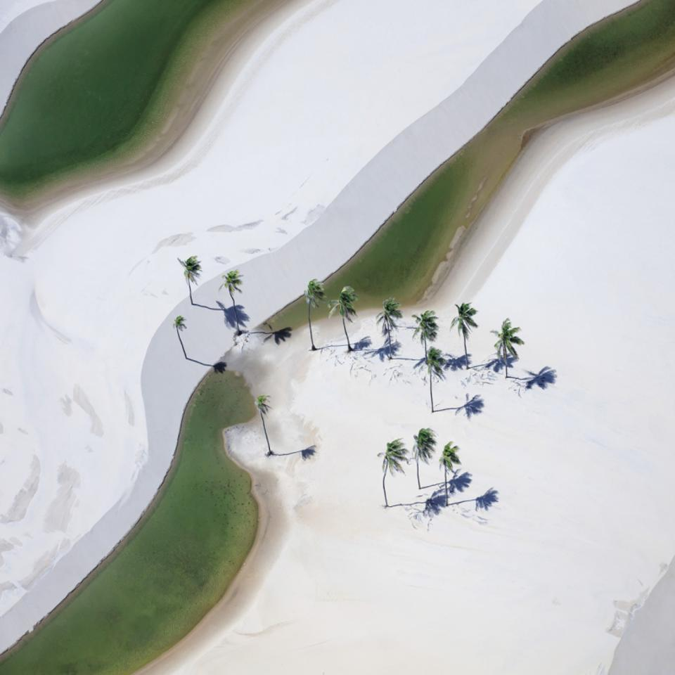 Siena Drone Photo Awards: palm trees with white background
