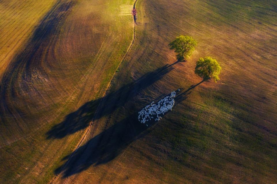 Siena Drone Photo Awards: shadows on a field in Tuscany Italy