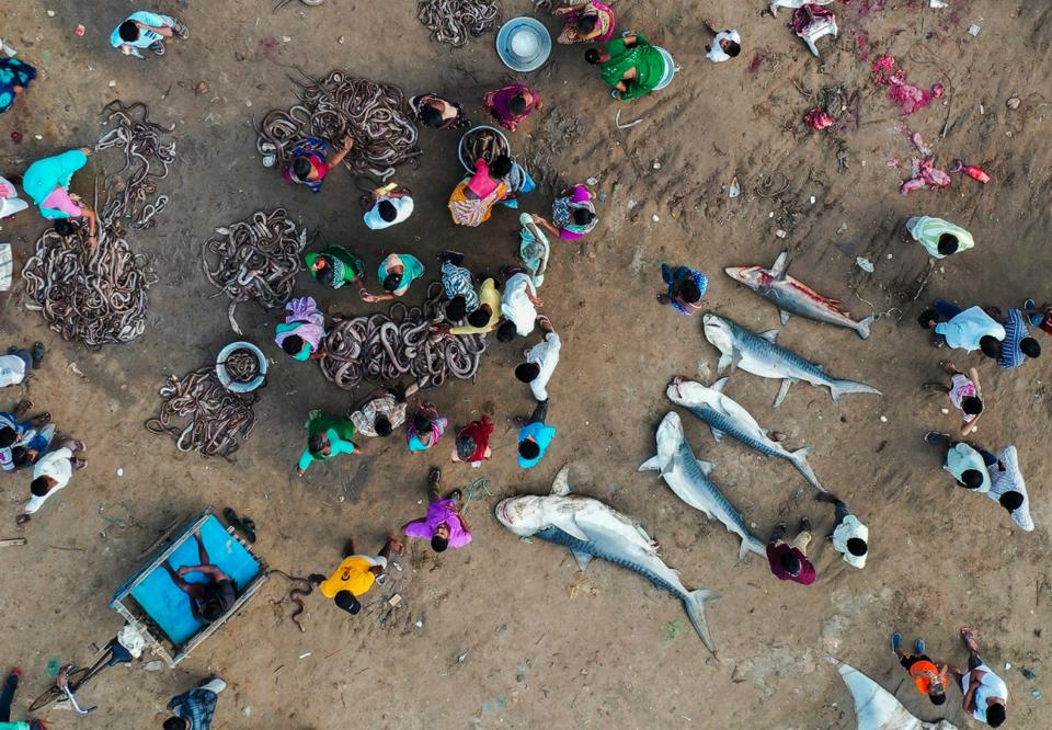 Siena Drone Photo Awards 2020: death big fish all around in a market in India