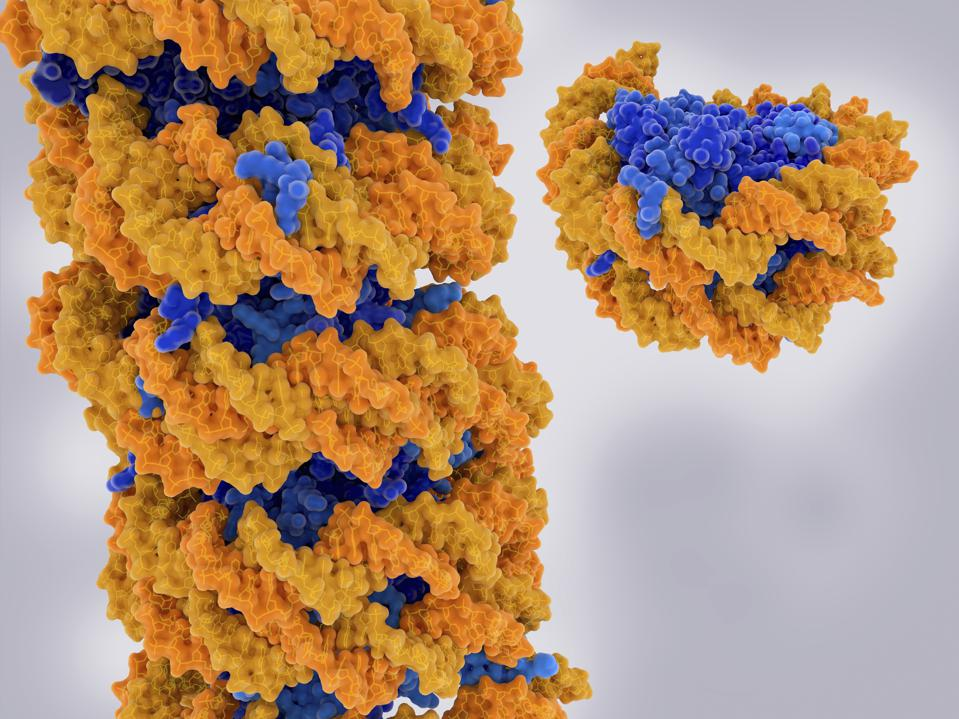 A DNA strand is wrapped around a core of proteins, forming chromatin