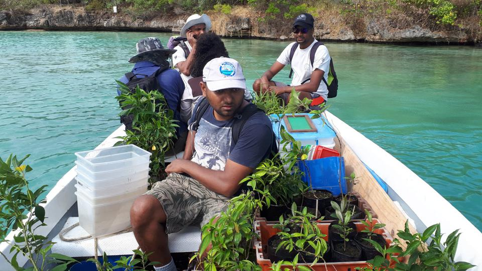 8 Aug 2020: MWF staff transporting rare plants from Ile aux Aigrettes to protect them from the fumes and toxins of the oil spill
