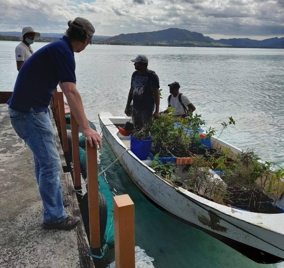 7 Aug 2020: transplanting endemic plants from Ile aux Aigrettes
