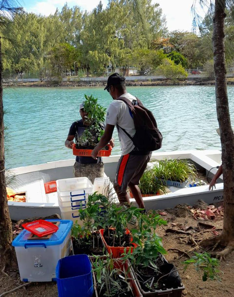 7 Aug 2020: offloading native plants from Ile aux Aigrettes to mainland Mauritius