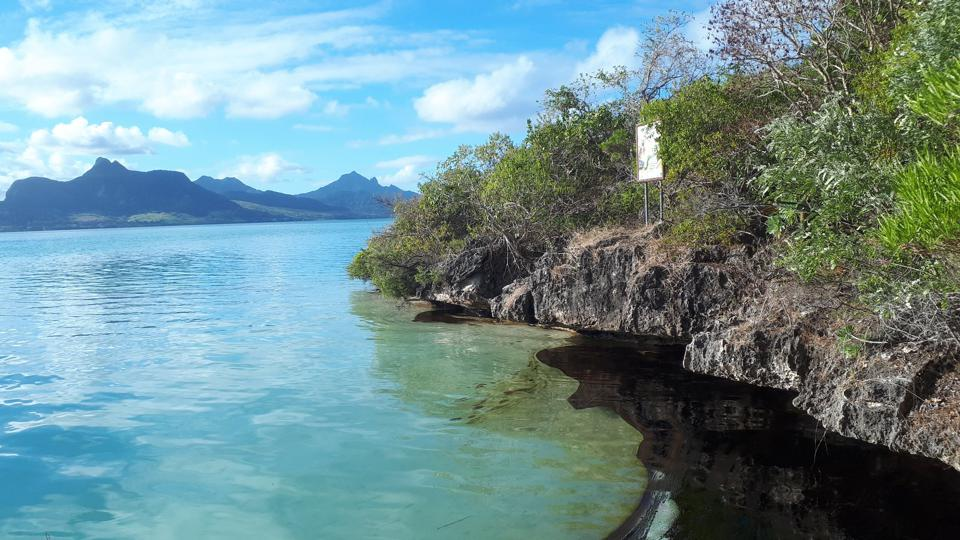7 aug - oil absorbed into the porous rock of ile aux aigrettes, creating long term risk for the island