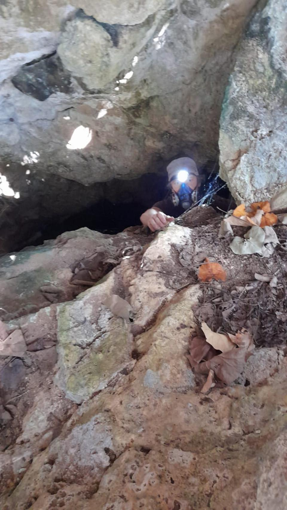 14 Aug 2020: Dr Nick Cole in Ile aux Aigrettes caves looking for the newly discovered Cave Cricket.  The entire population appears to have disappeared since the oil spill, as they were dependent on coastal algae as their food.