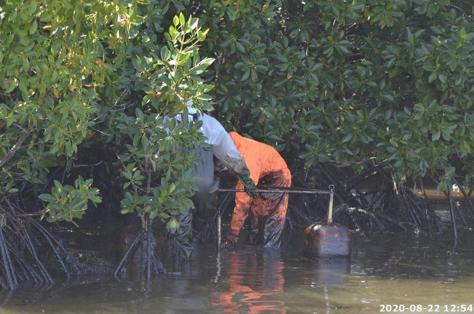 22 Aug 2020: the cleanup of oil in the mangroves is likely to last many years