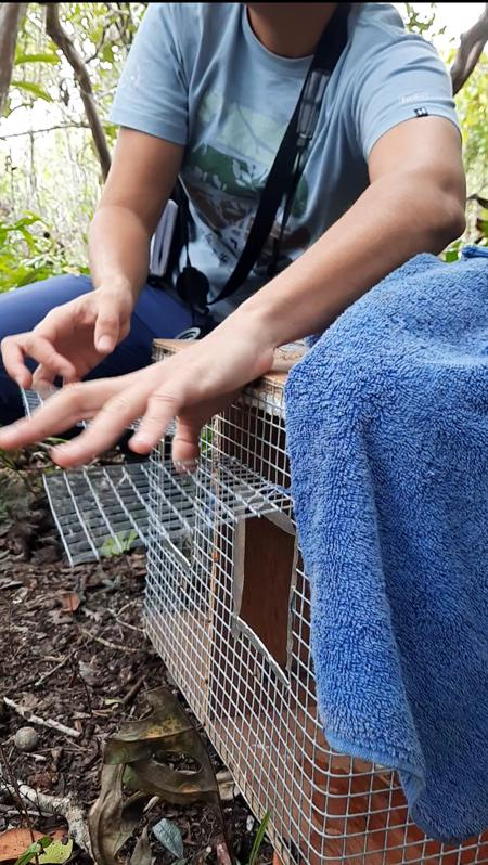 Six animals of the Mauritian Olive White Eye were captured and taken to safety from the oil fumes surrounding Ile aux Aigrettes