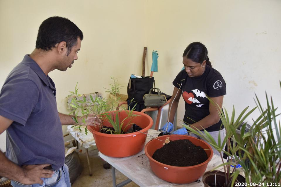 24 Aug 2020: the plants had to be transferred from their temporary transport bags, to more sustainable soil conditions.