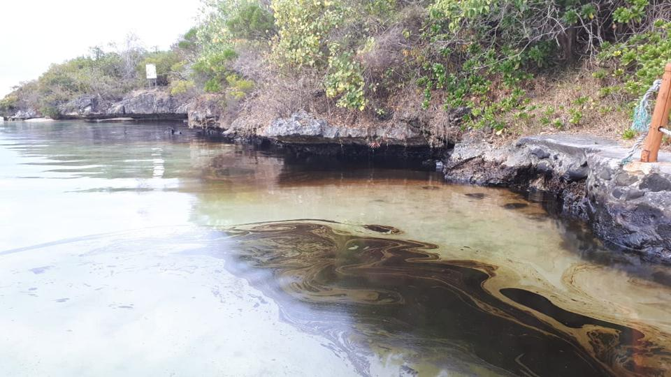 14 Aug 2020: within 8 days of the spill (and one day before the vessel split in two), oil can be seen underneath the rocky overhand of Ile aux Aigrettes, being absorbed by the porous rocks and root systems.  The water color had already changed color by now.