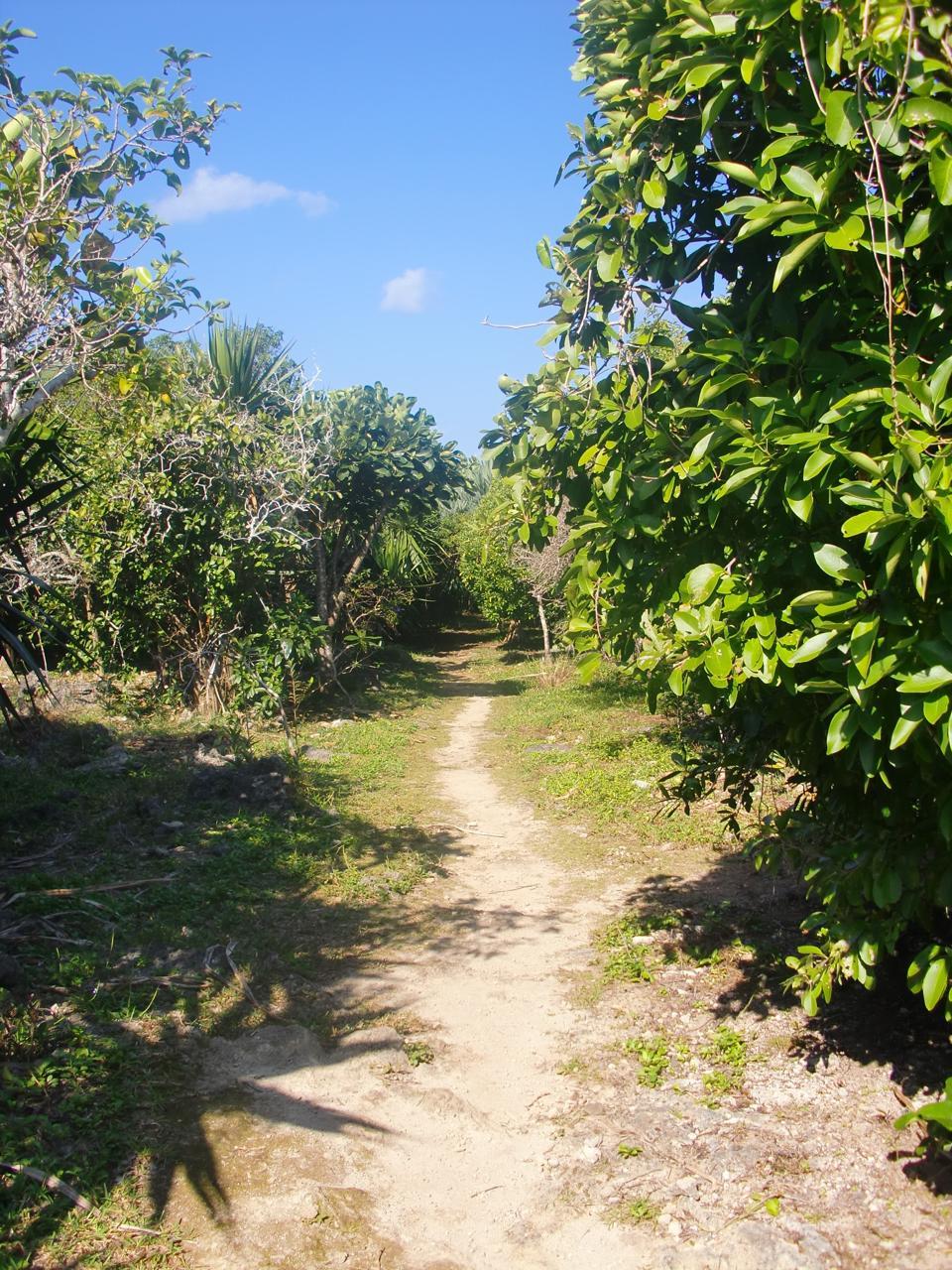 Ile aux Aigrettes path Covid-19 coronavirus restrictions