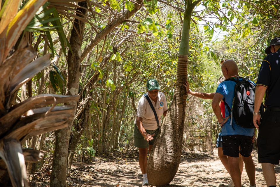 MWF Foundation rangers and staff are familiar with all the endemic  plants, animals and insects on the island