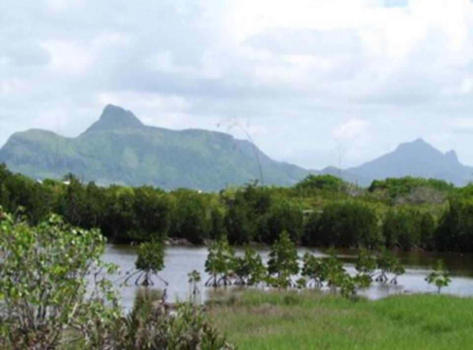 Mangrove Forests at Pointe d'Esny, close to Ile aux Aigrettes, and containing many critically endangered species.