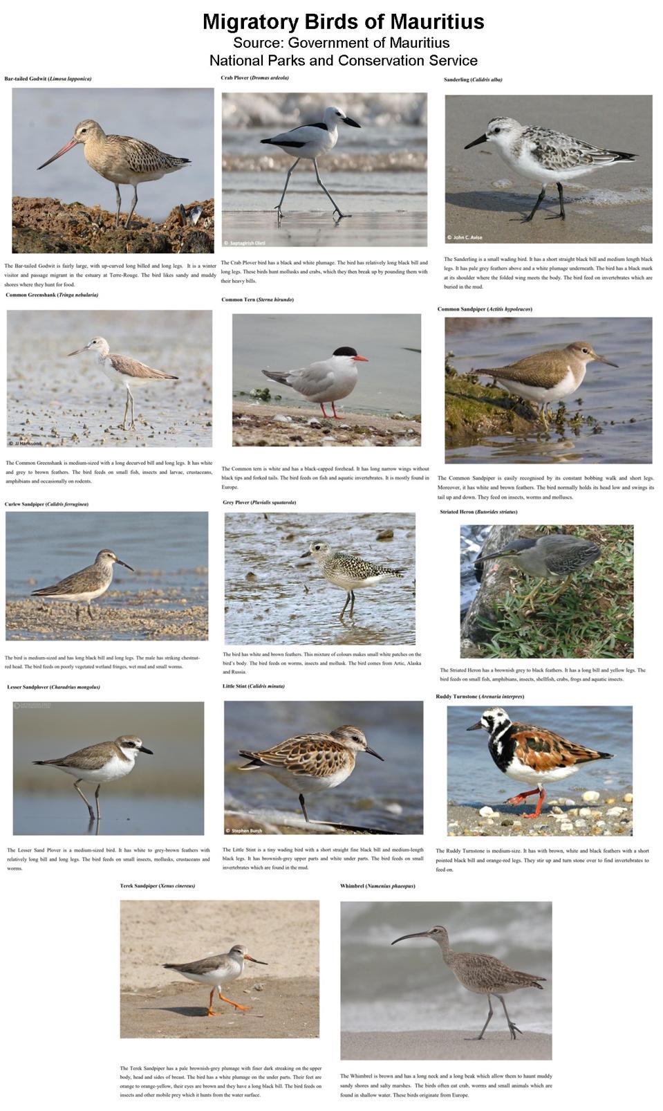14 of the main migratory birds through Mauritius