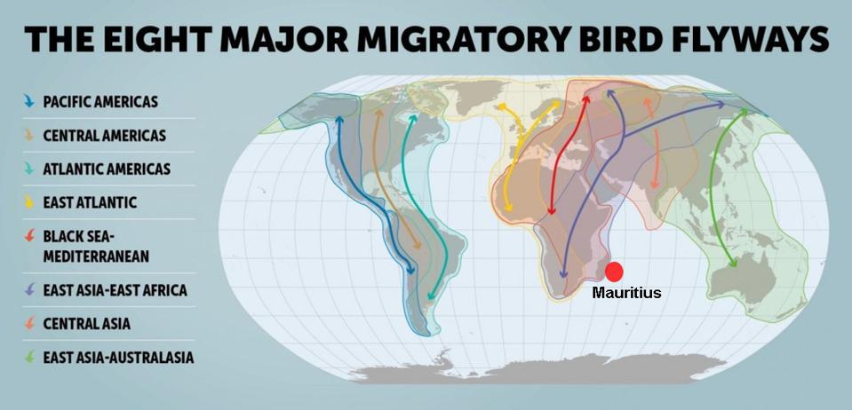 Mauritius lies on two of the eight major global migratory bird flyways