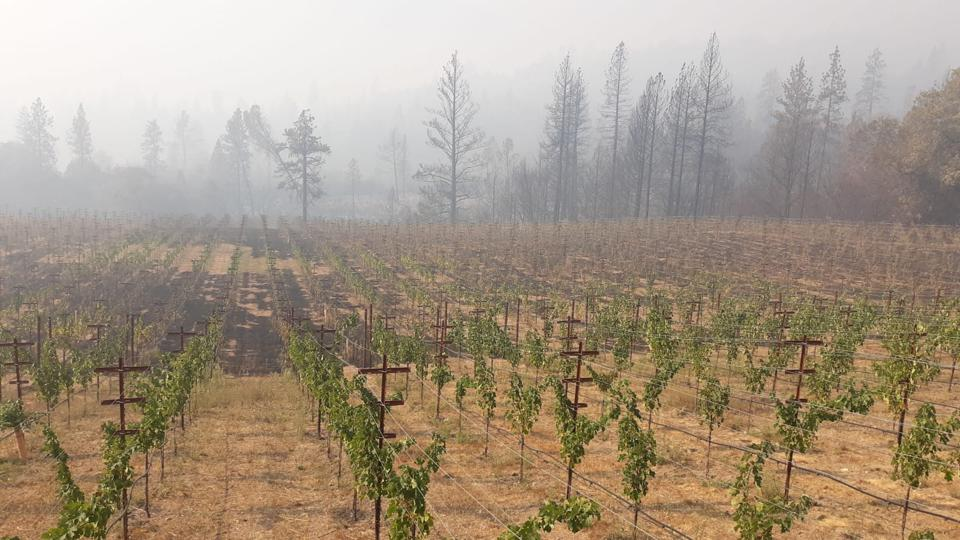 Michael Mondavi Family Estate Oso Vineyard, which sustained damage in this week's Glass Fire.
