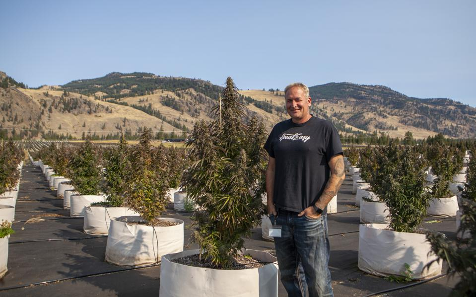 Marc Geen stands among rows of cannabis plants on his farm in Rock Creek, BC.