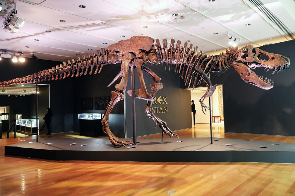 Christie's mette in mostra lo scheletro del tirannosauro rex noto come Stan prima della sua asta