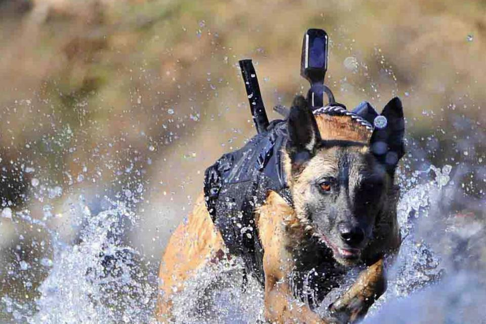 A torso-worn back-mounted camera of the type often worn by special operations dogs.