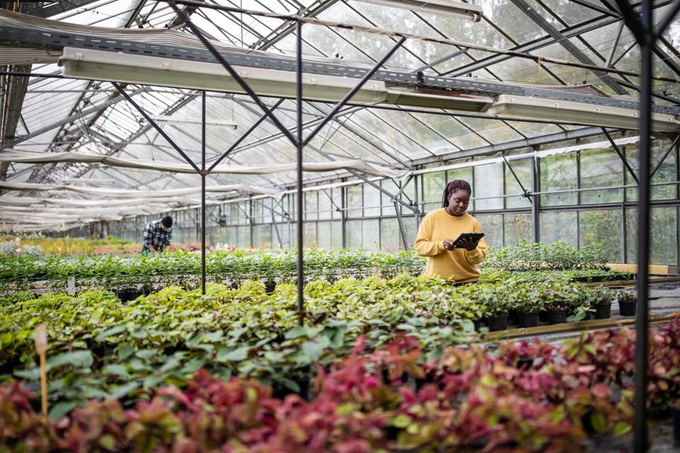 African female garden worker using digital tablet at greenhouse