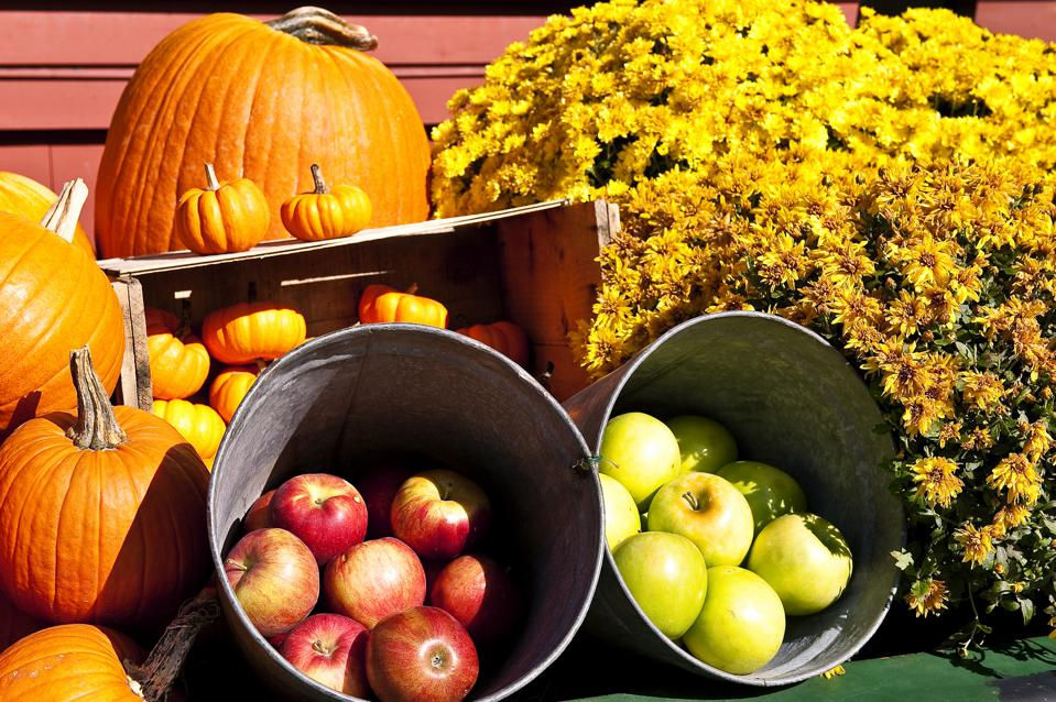 Colorful autumn display of flowers and fruit... Michigan best fall foliage