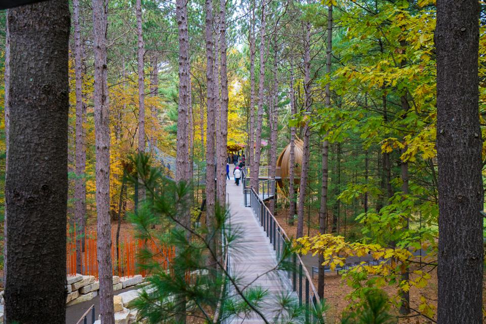 Whiting Forest Canopy Walk best fall foliage