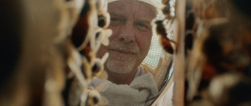 Man in beekeeper suit looks at the hives of honey
